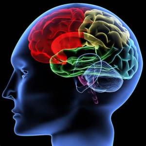 Scott Drotar Brain 1