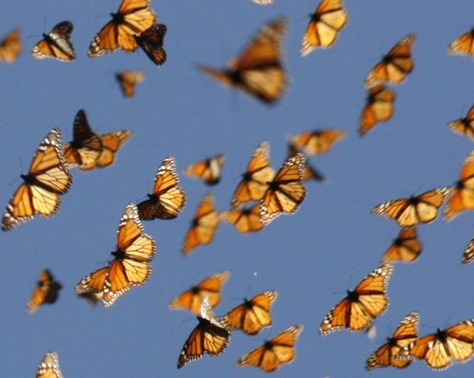 Scott Drotar Butterflies