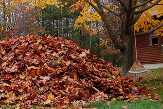 Scott Drotar Leaf Pile